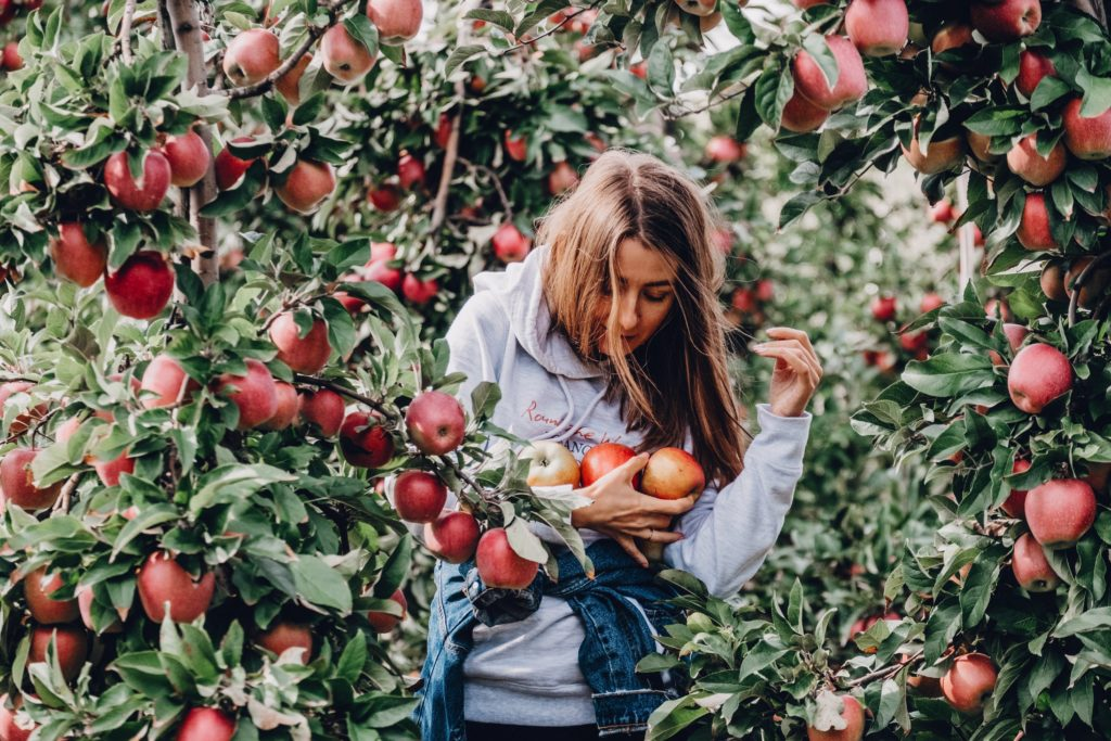 Woman walking through apple field with an arm full of freshly picked apples